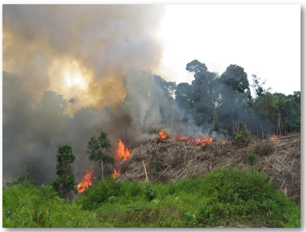 Kebakaran Hutan di Kalimantan Barat Siaga I